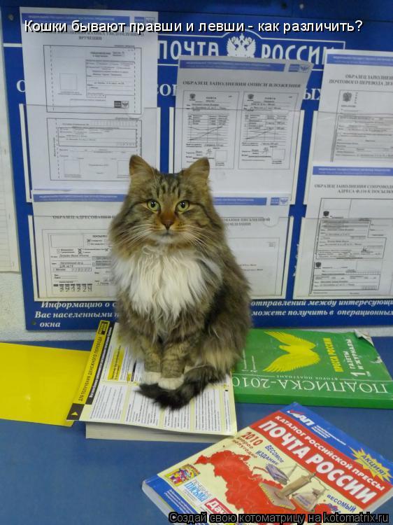 Котоматрица: Кошки бывают правши и левши - как различить?
