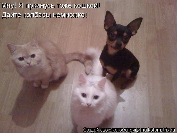Котоматрица: Мяу! Я пркинусь тоже кошкой! Дайте колбасы немножко!