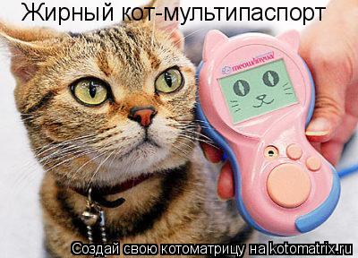 Котоматрица: Жирный кот-мультипаспорт