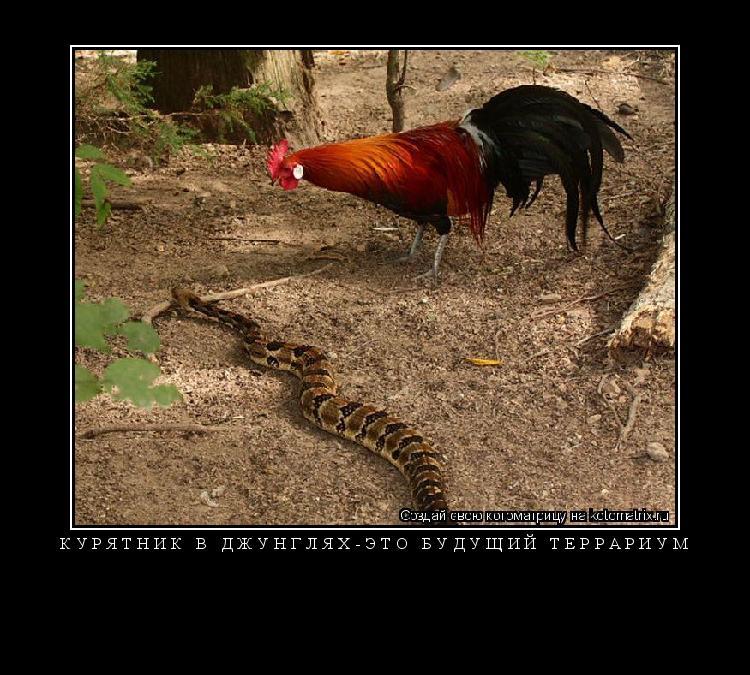 Котоматрица: Курятник в джунглях-это будущий террариум