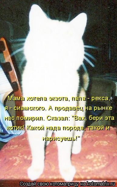 """Котоматрица: Мама хотела экзота, папа - рекса,  нас помирил. Сказал: """"Вах, бери эта  котик! Какой нада порода, такой и  я - сиамского. А продавец на рынке  нари"""