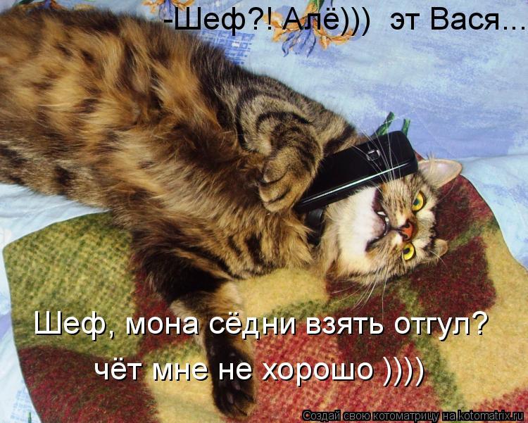 Котоматрица: -Шеф?! Алё)))  эт Вася.... Шеф, мона сёдни взять отгул? чёт мне не хорошо ))))