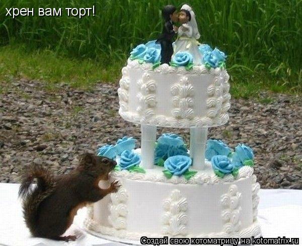 Котоматрица: хрен вам торт!
