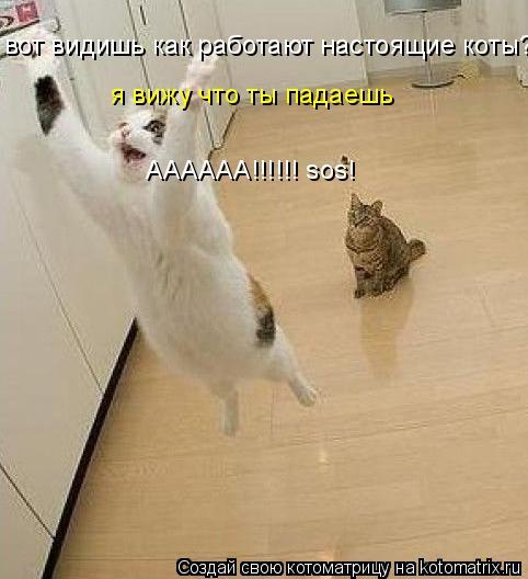 Котоматрица: вот видишь как работают настоящие коты? я вижу что ты падаешь АААААА!!!!!! sos!
