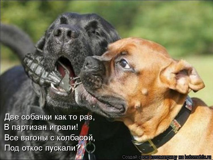 Котоматрица: Две собачки как то раз, В партизан играли! Все вагоны с колбасой, Под откос пускали?