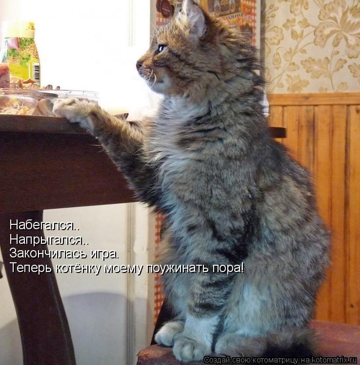Котоматрица: Набегался.. Напрыгался.. Закончилась игра. Теперь котёнку моему поужинать пора!