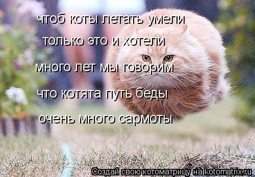 Котоматрица: чтоб коты летать умели только это и хотели много лет мы говорим что котята путь беды очень много сармоты