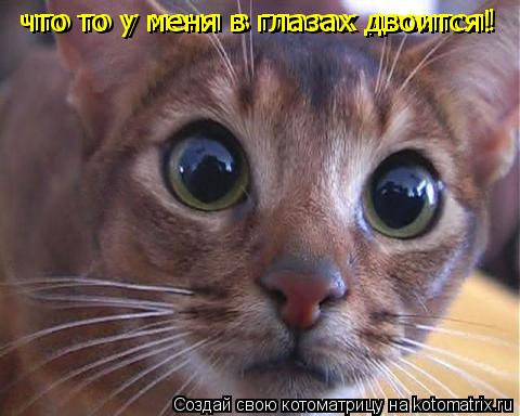 Котоматрица: что то у меня в глазах двоится! что то у меня в глазах двоится!