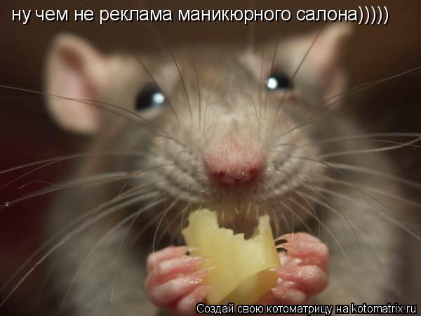Котоматрица: ну чем не реклама маникюрного салона)))))