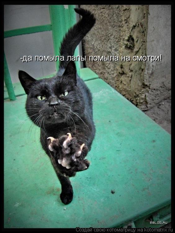 Котоматрица: -да помыла лапы помыла на смотри!