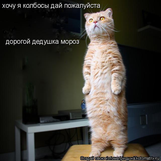 Котоматрица: дорогой дедушка мороз хочу я колбосы дай пожалуйста