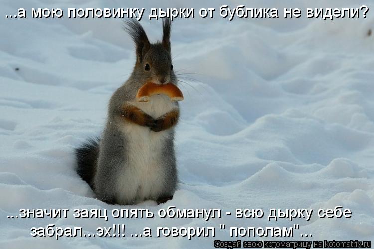 """Котоматрица: ...а мою половинку дырки от бублика не видели? ...значит заяц опять обманул - всю дырку себе  забрал...эх!!! ...а говорил """" пополам""""..."""