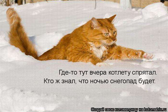 Котоматрица: Где-то тут вчера котлету спрятал. Кто ж знал, что ночью снегопад будет.