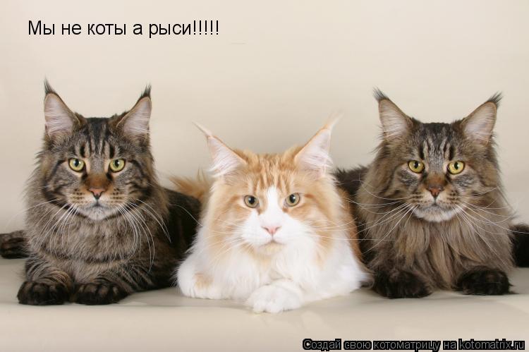 Котоматрица: Мы не коты а рыси!!!!!
