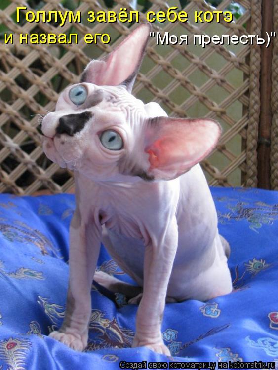 """Котоматрица: Голлум завёл себе котэ  и назвал его  """"Моя прелесть)"""""""