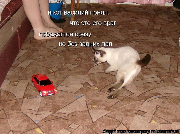 Котоматрица: и кот василий понял, что это его враг побежал он сразу но без задних лап