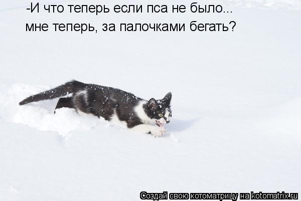 Котоматрица: -И что теперь если пса не было... мне теперь, за палочками бегать?