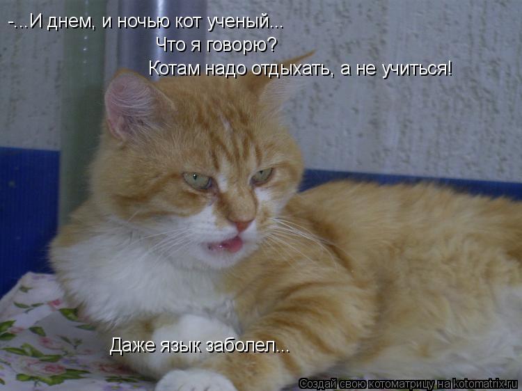 Котоматрица: -...И днем, и ночью кот ученый... Что я говорю? Котам надо отдыхать, а не учиться! Даже язык заболел...
