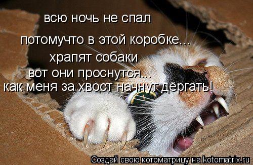 Котоматрица: всю ночь не спал потомучто в этой коробке... храпят собаки вот они проснутся... как меня за хвост начнут дёргать!