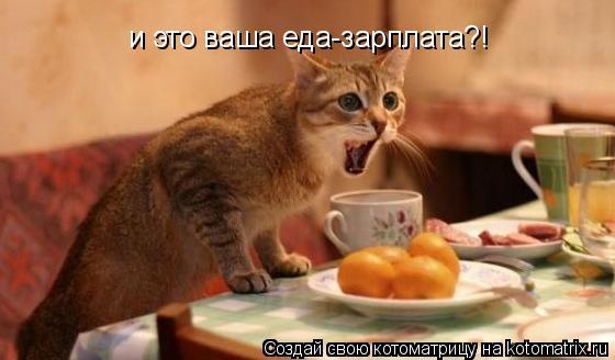 Котоматрица: и это ваша еда-зарплата?!