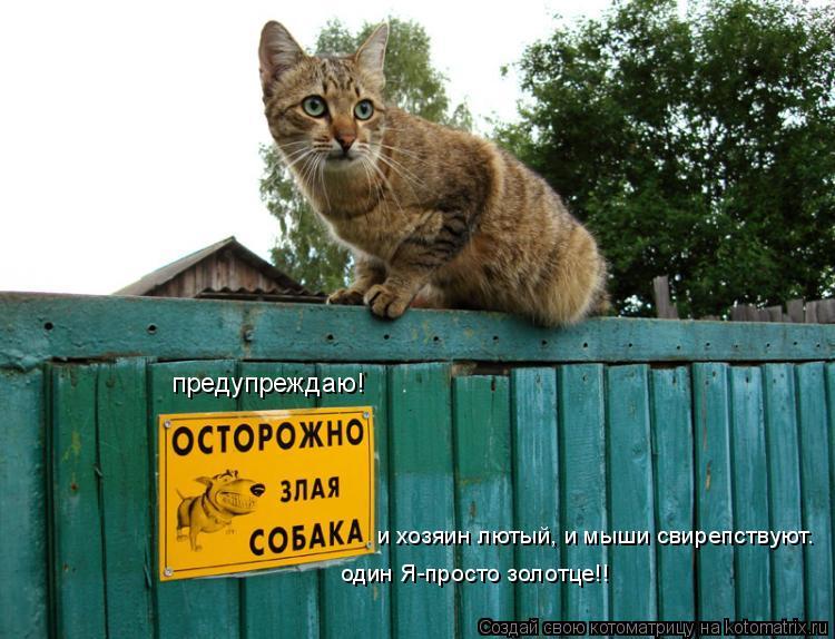 Котоматрица: и хозяин лютый, и мыши свирепствуют. один Я-просто золотце!! предупреждаю!