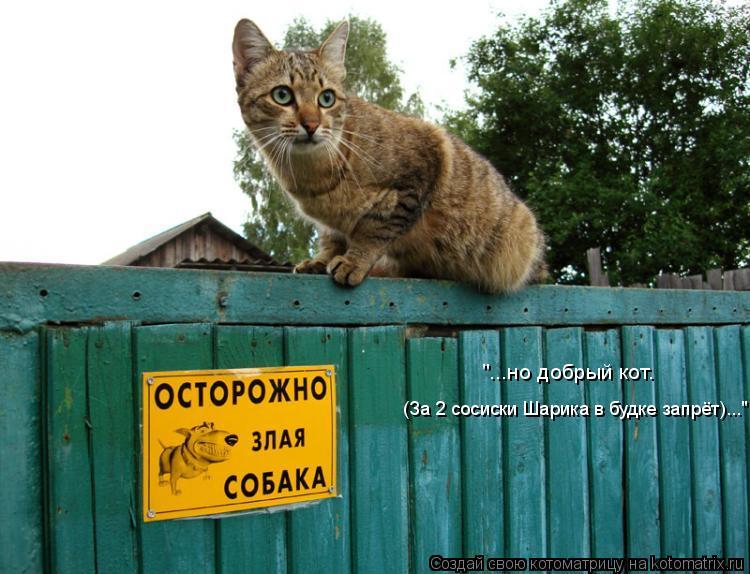 """Котоматрица: """"...но добрый кот. (За 2 сосиски Шарика в будке запрёт)..."""""""