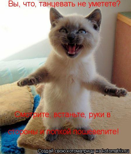 Котоматрица: Вы, что, танцевать не уметете? Смотрите, встаньте, руки в стороны и попкой пошевелите!