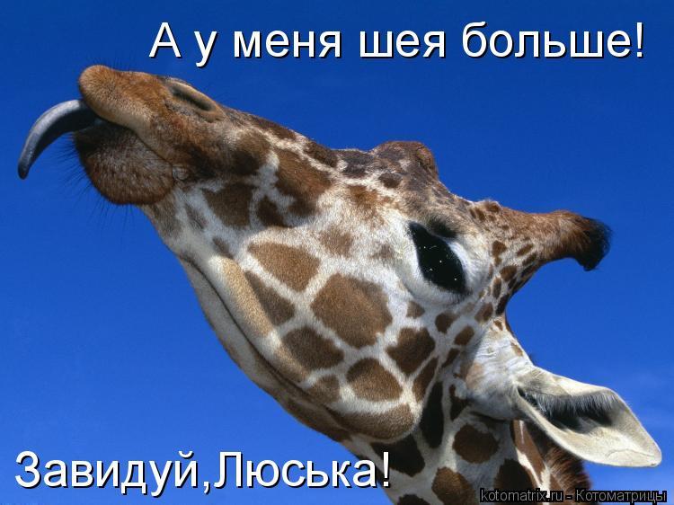 Котоматрица: А у меня шея больше! Завидуй,Люська!