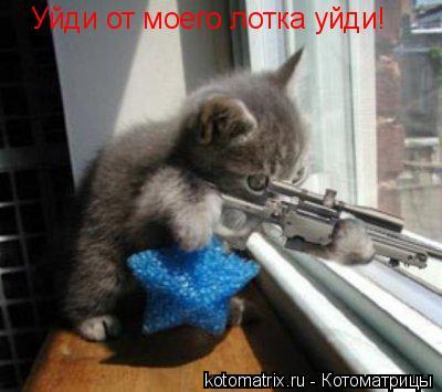 Котоматрица: Уйди от моего лотка уйди!