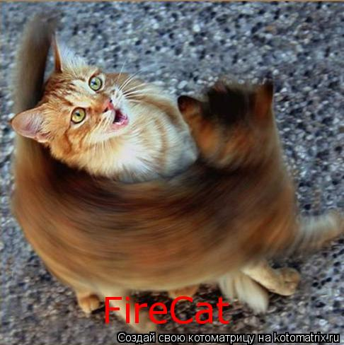 Котоматрица: FireCat