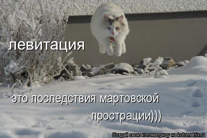 Котоматрица: левитация это последствия мартовской  прострации)))