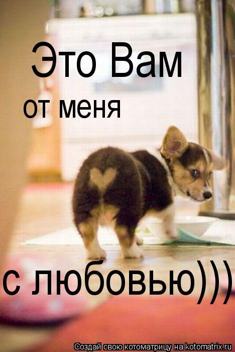 Котоматрица: от меня с любовью))) Это Вам