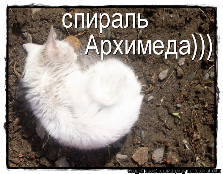 Котоматрица: спираль Архимеда)))