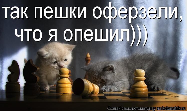 Котоматрица: так пешки оферзели, что я опешил)))