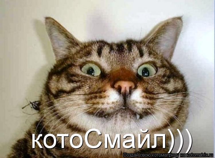 Котоматрица: котоСмайл)))