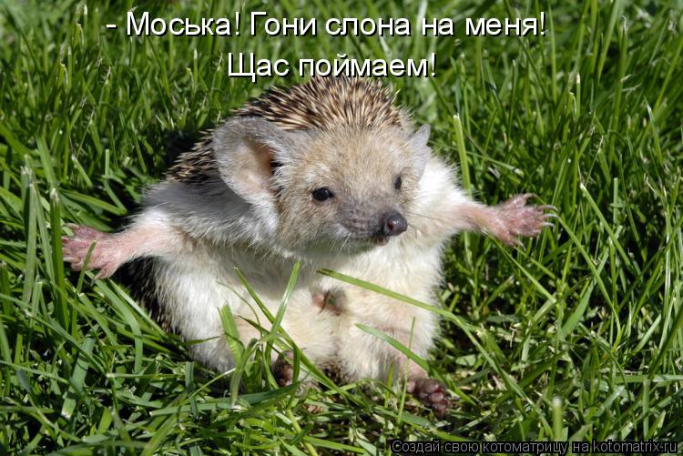 http://kotomatrix.ru/images/lolz/2011/02/21/830416.jpg