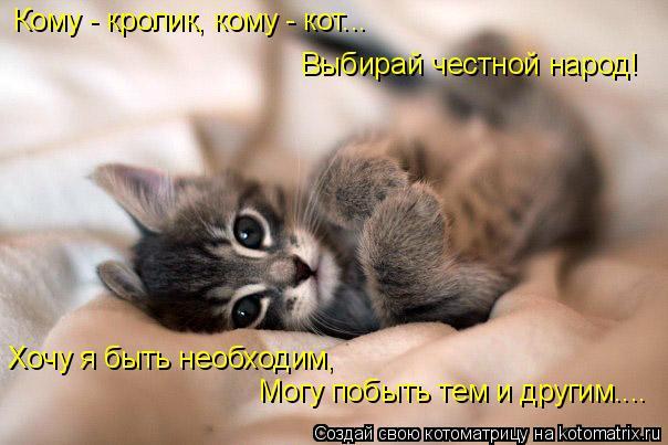 Котоматрица: Кому - кролик, кому - кот... Выбирай честной народ! Хочу я быть необходим,  Могу побыть тем и другим....