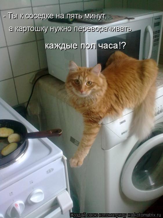 Котоматрица: - Ты к соседке на пять минут,  а картошку нужно переворачивать каждые пол часа!?