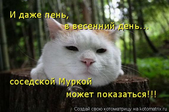 Котоматрица: И даже пень,  в весенний день... соседской Муркой может показаться!!!