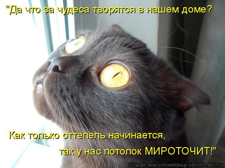 """Котоматрица: """"Да что за чудеса творятся в нашем доме? Как только оттепель начинается,  так у нас потолок МИРОТОЧИТ!"""""""