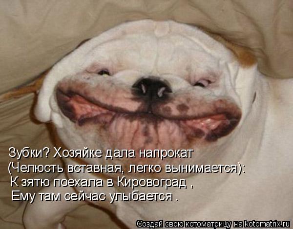 Котоматрица: Зубки? Хозяйке дала напрокат (Челюсть вставная, легко вынимается): К зятю поехала в Кировоград , Ему там сейчас улыбается .