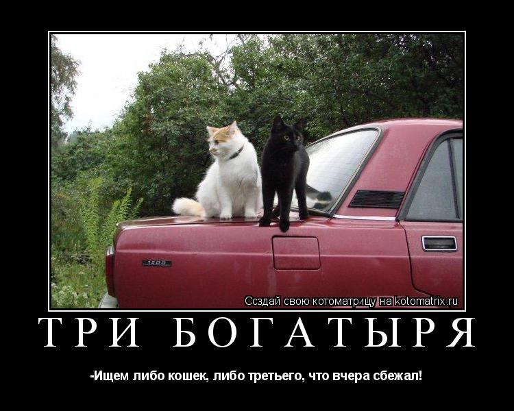 Котоматрица: три богатыря -Ищем либо кошек, либо третьего, что вчера сбежал!