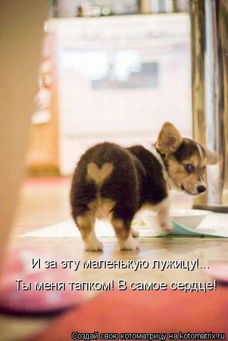 И за эту маленькую лужицу!... Ты меня тапком! В самое сердце!