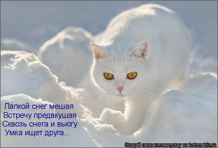 Котоматрица: Лапкой снег мешая  Встречу предвкушая Сквозь снега и вьюгу Умка ищет друга...