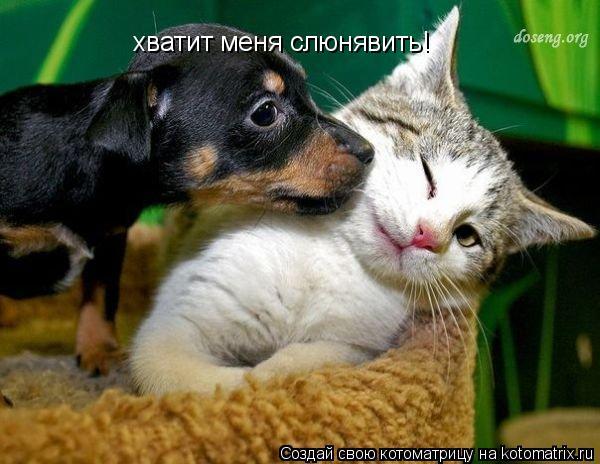 Котоматрица: хватит меня слюнявить!