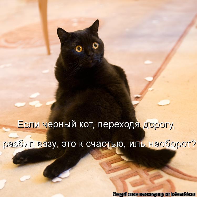 Котоматрица: Если черный кот, переходя дорогу, разбил вазу, это к счастью, иль наоборот?