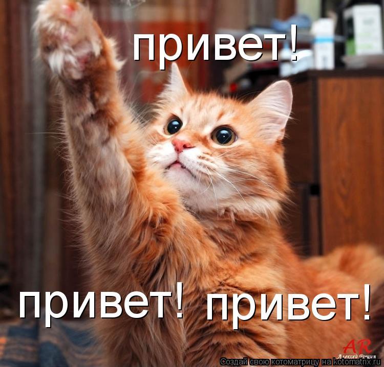 Котоматрица: привет! привет! привет!