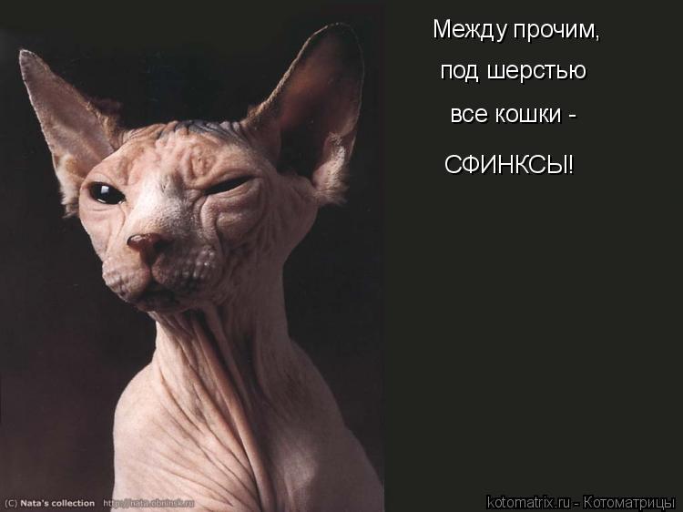 Котоматрица - Между прочим, под шерстью все кошки - СФИНКСЫ!