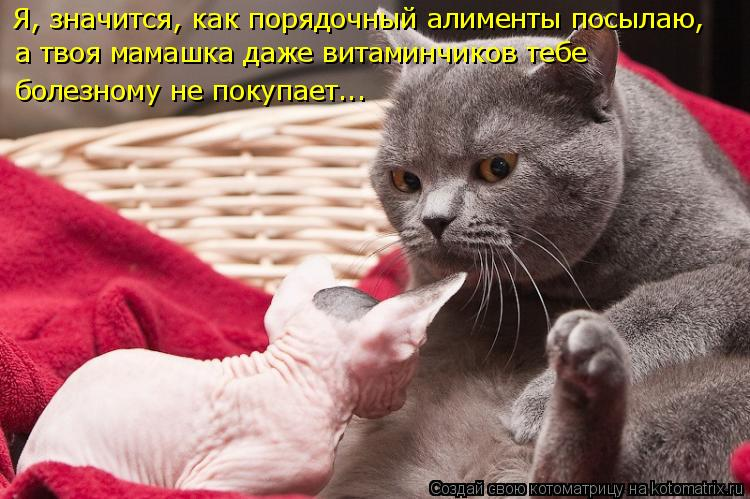 Котоматрица: Я, значится, как порядочный алименты посылаю, а твоя мамашка даже витаминчиков тебе болезному не покупает...