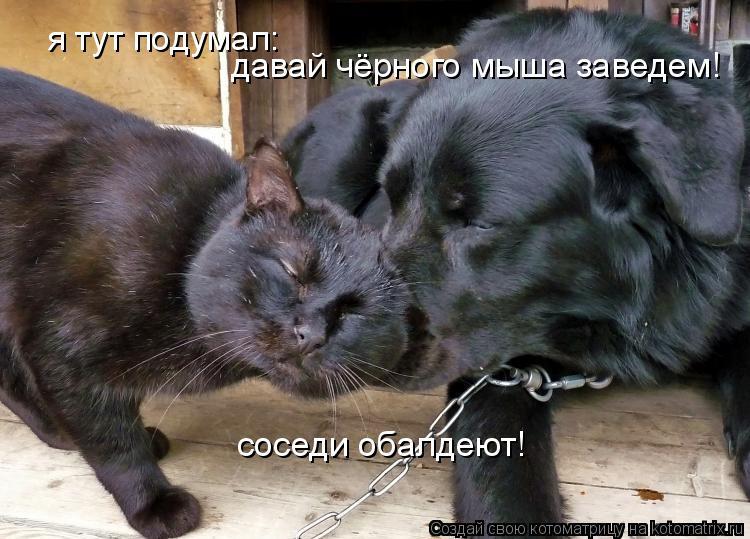 Котоматрица: я тут подумал: давай чёрного мыша заведем! соседи обалдеют!
